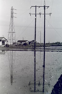 1968年小金井街道の送電線.jpg