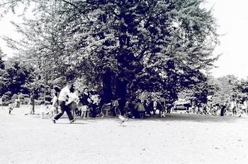 1974年6月鑁阿寺境内銀杏木陰1.jpg