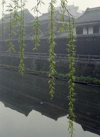 1988年4月霧の巴波川河畔.jpg