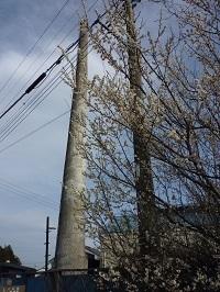 2011年3月飯沼酒造1.jpg