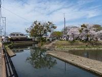 2015年4月室町付近の巴波川.jpg