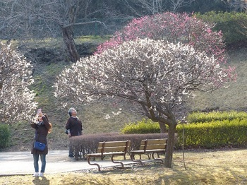 佐野梅林公園4.jpg