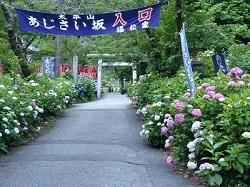 太平山あじさい坂0.jpg