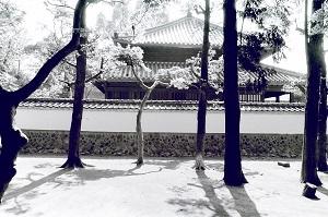 孔子廟1.jpg