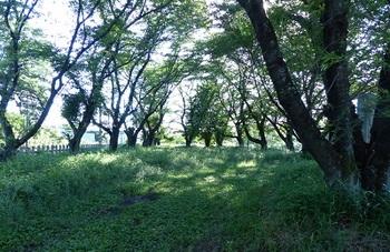 小野寺公園.jpg