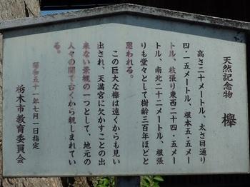 新井天満宮の大欅2.jpg