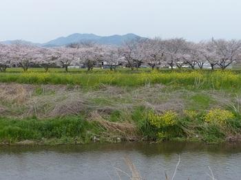 春日神社(横堀)1.jpg