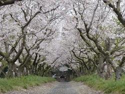春日神社(横堀)4.jpg