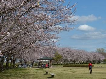 永野川緑地公園.jpg