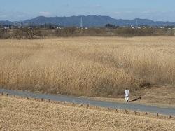 渡良瀬遊水地ウォーク2.jpg