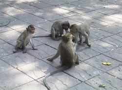 猿5.jpg