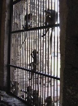 猿6.jpg