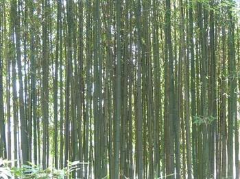 翁島庭園竹林.jpg