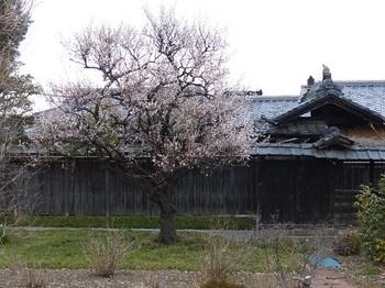 翁島春景.jpg