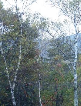 雨の中の紅葉3.jpg