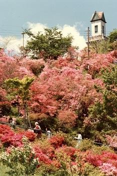 1980年ツツジの錦着山.jpg