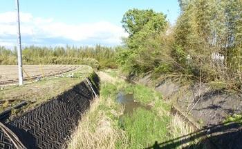 2013年5月2日砂畑橋より下流方向を.jpg