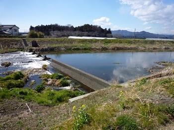 中村橋下流の堰.jpg