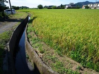 南東方向に向かう水路.jpg