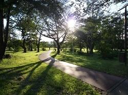 和光樹林公園2.jpg