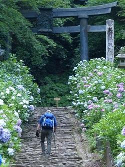 太平山あじさい坂10.jpg