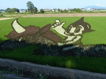 小山たんぼアート(絹)1.jpg