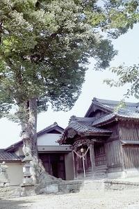 新井天満宮の大欅4.jpg