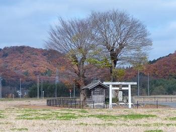 新千塚橋9.jpg
