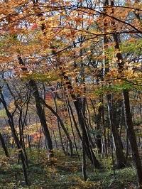 木の俣渓谷の紅葉1.jpg