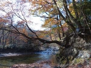 木の俣渓谷の紅葉2.jpg