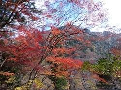 板室温泉の紅葉1.jpg