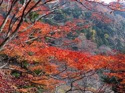 板室温泉の紅葉2.jpg