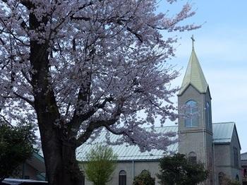 栃木カトリック教会の桜.jpg