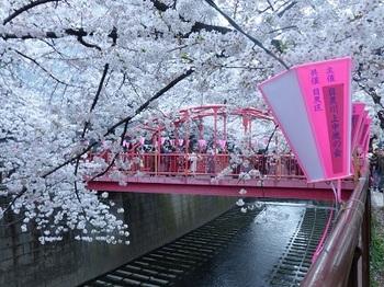 目黒川の桜7.jpg