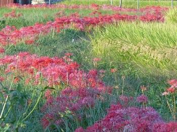 箱森町の秋景色1.jpg