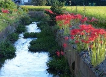 箱森町の秋景色2.jpg