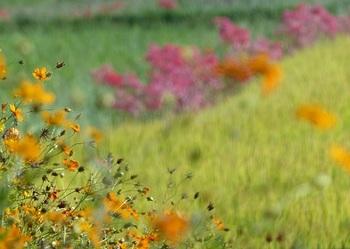 箱森町の秋景色3.jpg