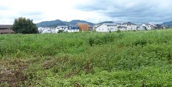 箱森町西部住宅開発.jpg