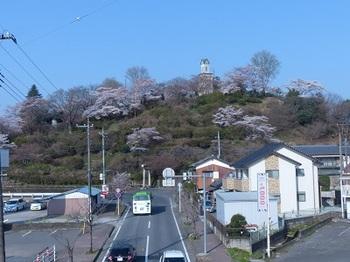 錦着山の桜1.jpg