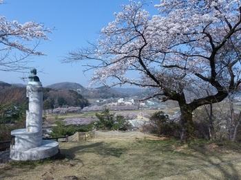 錦着山の桜6.jpg