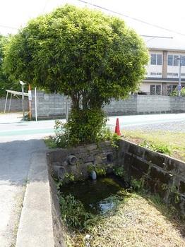 鍋山街道脇の堀.jpg