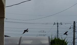 飛ぶ2.jpg